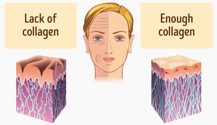 Collagen Rich Foods That Prevents Your Early Ageing 1