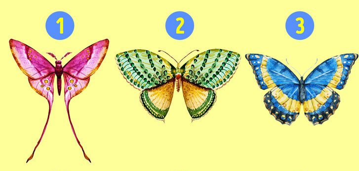 6 Hidden Facts Regarding Personality With The Choice Of Butterfly You Like 1