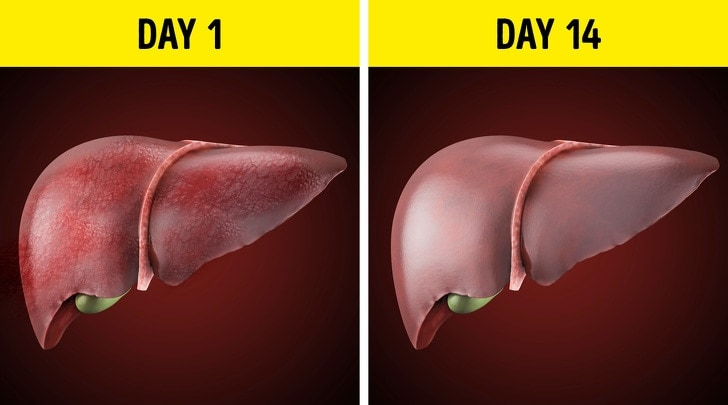 Changes That You Usually See After You Stop Drinking Alcohol From Last 28 Days 7